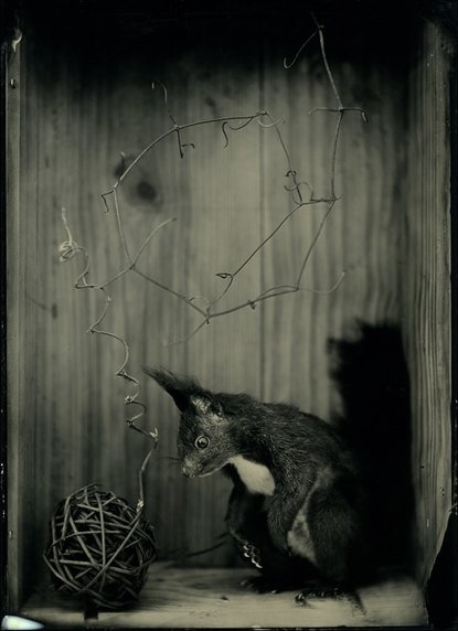 The Squirrel and the twisty stick one-of-a-kind wet-plate collodion ferrotypes and ambrotypes (photographs on metal and glass plates]